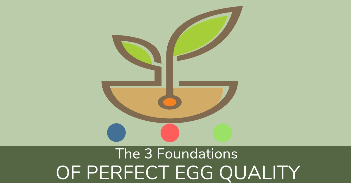 The Three Foundations Of Perfect Egg Quality